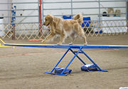 "The image ""http://upload.wikimedia.org/wikipedia/commons/thumb/f/f7/Golden_Retriever_agility_teeter.jpg/180px-Golden_Retriever_agility_teeter.jpg"" cannot be displayed, because it contains errors."