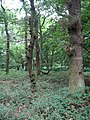 Gosforth Wood - geograph.org.uk - 962819.jpg