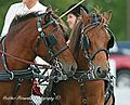 Gotland-Russ Ponies.jpg