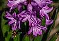Gradina Botanica (8704851875).jpg