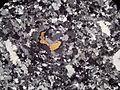 Granulite-micro.jpg