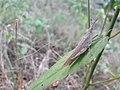 Grasshopper20170925 172627.jpg