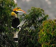 Velký pestře zbarvený pták seděl na stromě