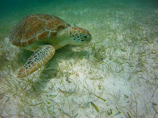 sea turles best things to do in cancun mexico
