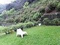 Green Trail 綠色小徑 - panoramio.jpg
