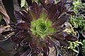 Greenhouses in qom عکس های گلخانه دنیای خار در روستای مبارک آباد قم 05.jpg