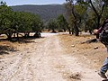 Groves near nahal Amud - panoramio.jpg