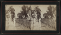 Guards, by Pach, G. W. (Gustavus W.), 1845-1904.png