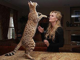 Scarlett's Magic - Scarlett's Magic Stands Tall with Kimberly Draper, Owner