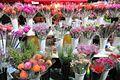 HK 銅鑼灣 CWB 維多利亞公園 Victoria Park Lunar NY Market night flower stall Jan 2017 IX1 001.jpg
