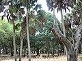 Hammock (forest) floor inside Florida's Myakka State Park 2.jpg
