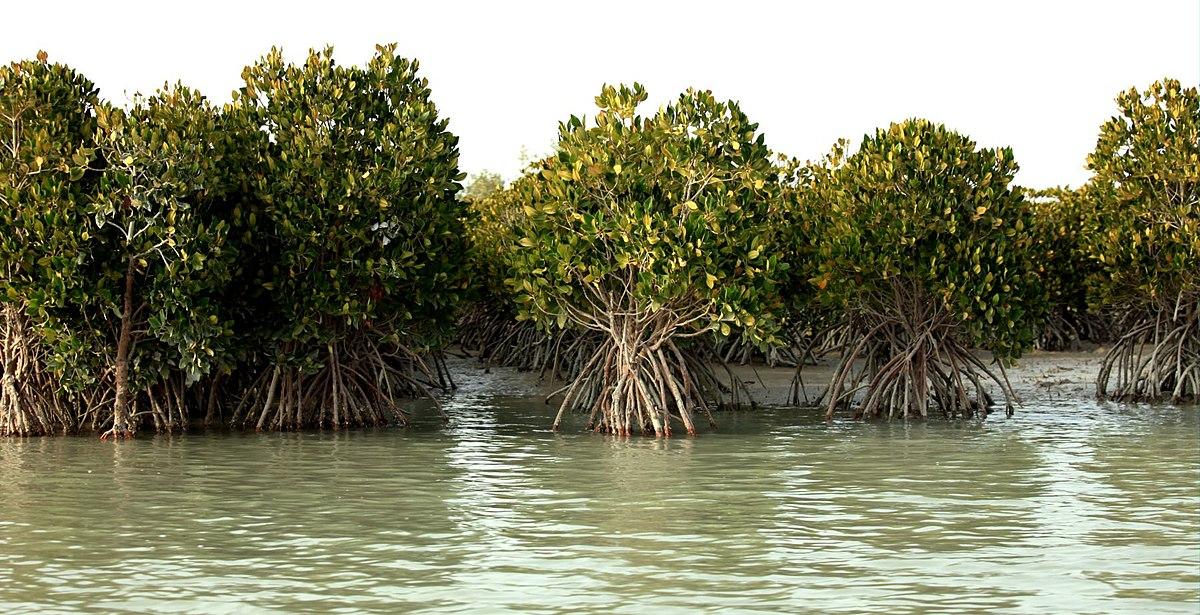 Mangrovemetsät
