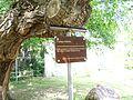 Harbke - Ginkgobaum 1758.jpg