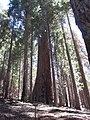 Hart Tree (1).JPG
