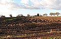 Harvest in progress - geograph.org.uk - 1068424.jpg
