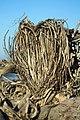 Heart of Twigs (30799941320).jpg