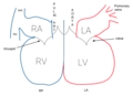 Heart valves (heart schematic).png