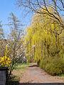 Heppenheim-Bergstr Arboretum 006.jpg