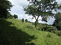 Hillside above Threepwood - geograph.org.uk - 498502.jpg