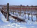 Hochkultur Winter 1.JPG