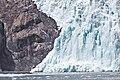 Holgate Glacier ENBLA38.jpg