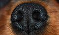 Hollys nose --) (1478392924).jpg