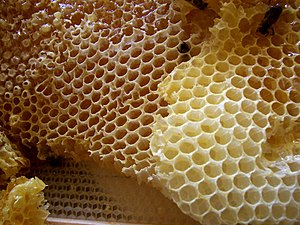 Kvasir - Honey combs; upon his death, Kvasir's blood was drained and mixed with honey, which became the Mead of Poetry