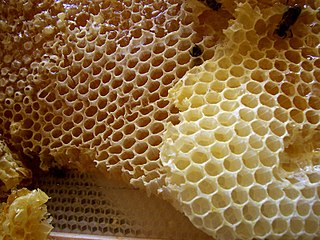 Honeycomb mass of hexagonal wax cells built by honey bees in their nests