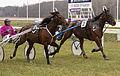 Horse Races 010 (8605825549).jpg