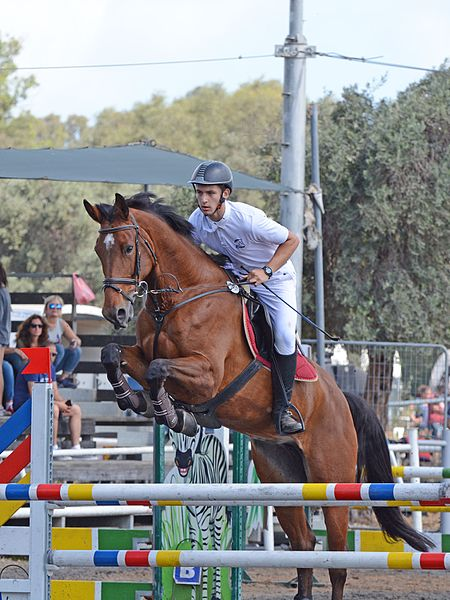 File:Horse and rider jumping over a hurdle - Show Jumping.jpg