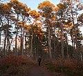 Hoveskogen2019r.jpg