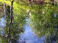 Hupisaaret Trees Oulu 20040529.jpg