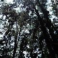 Hutan Pinus 1 Banjarbaru.jpg