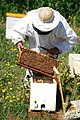 INTA - apiculturor (1).jpg