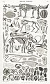 Illustration from A History of the Earth and Animated Nature by Oliver Goldsmith from rawpixel's own original edition of the publication 00005.jpg