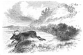 Illustrirte Zeitung (1843) 09 140 1 Die Hirschjagd.PNG
