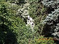 Imperial Botanical Garden 1713 - panoramio.jpg