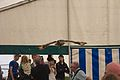 Indian Eagle Owl, Cheshire Game and Country Fair 2014 6.jpg