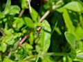 Insect spider 20070709 0093.jpg