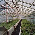 Interieur potplantenkas - Aalsmeer - 20404729 - RCE.jpg