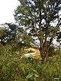 Itupeva - SP - panoramio (131).jpg
