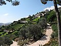 Izrael, Hafia, Bahai zahrady, celkový pohled.JPG