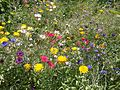 Japanese flower meadow.jpg
