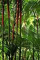 Jardín Botánico Singapur 12.jpg