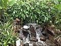 Jardim Botânico - Curitiba PR - panoramio (15).jpg
