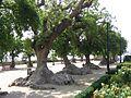 Jardins Miramar1.jpg