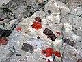 Jasper pebbles in quartzite (Lorrain Formation, Paleoproterozoic, ~2.3 Ga; Ottertail Lake Northeast roadcut, near Bruce Mines, Ontario, Canada) 14 (40742720443).jpg