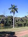 Jd. Botânico3 - panoramio.jpg