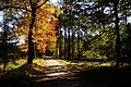 Jesień - panoramio (11).jpg