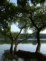 Jezioro Rusalka Poznan.jpg